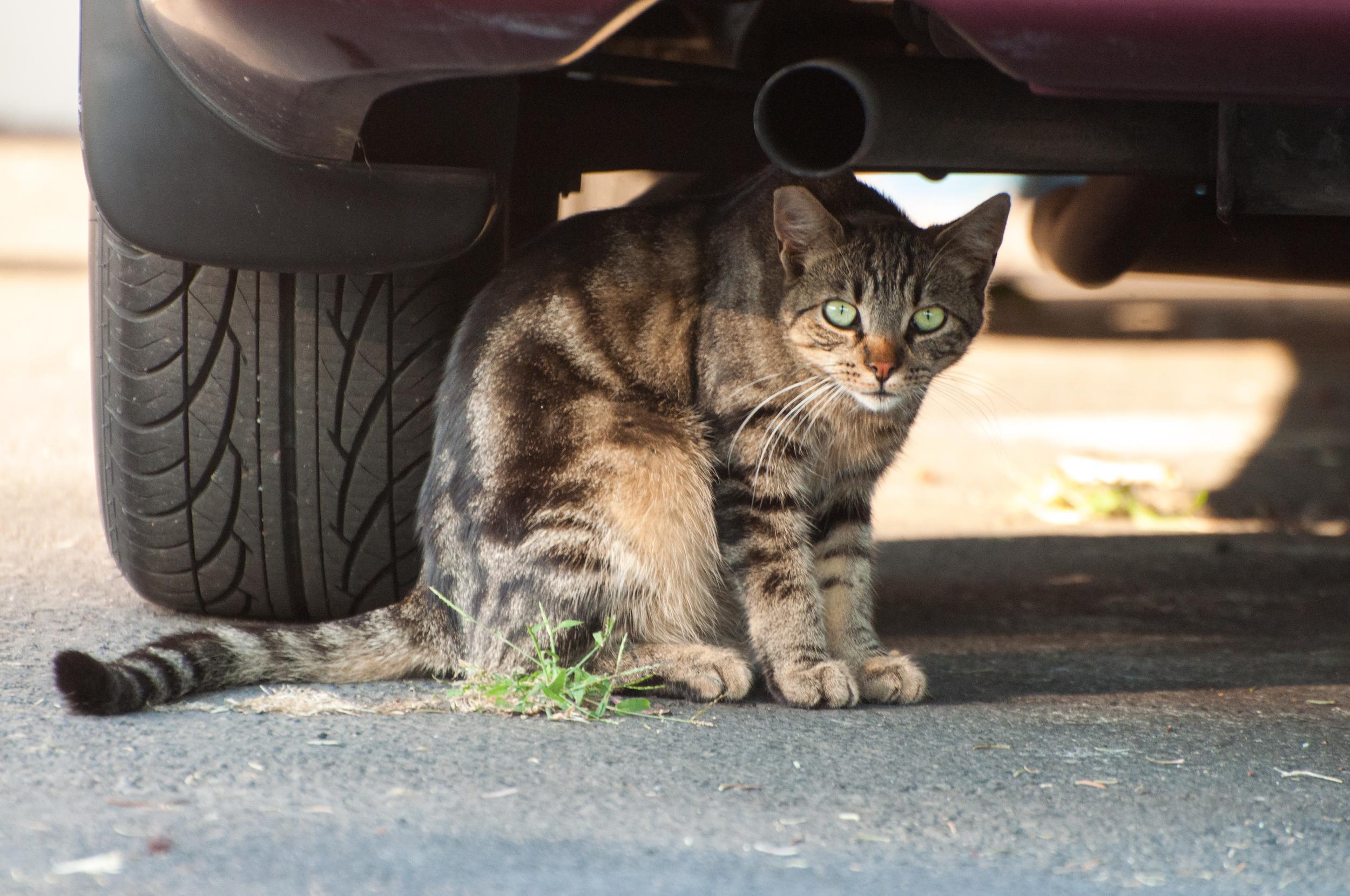 Hayden Island Cat Count 09.jpg