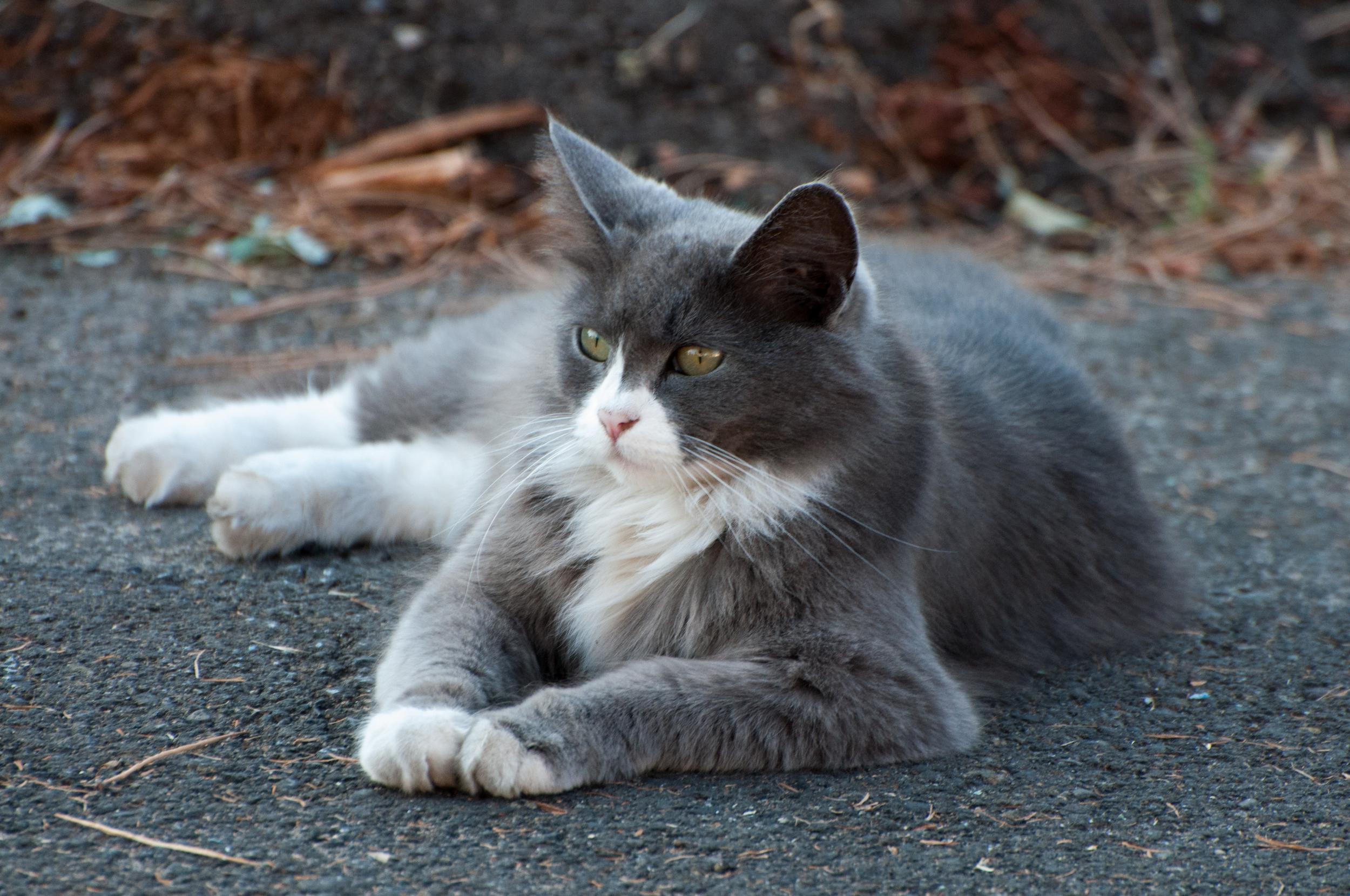 Hayden Island Cat Count 12.jpg