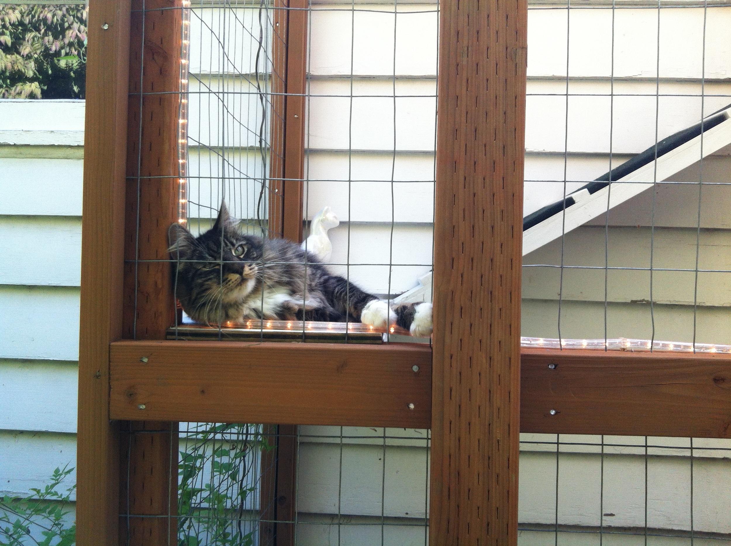 photo - kitty in corner.JPG