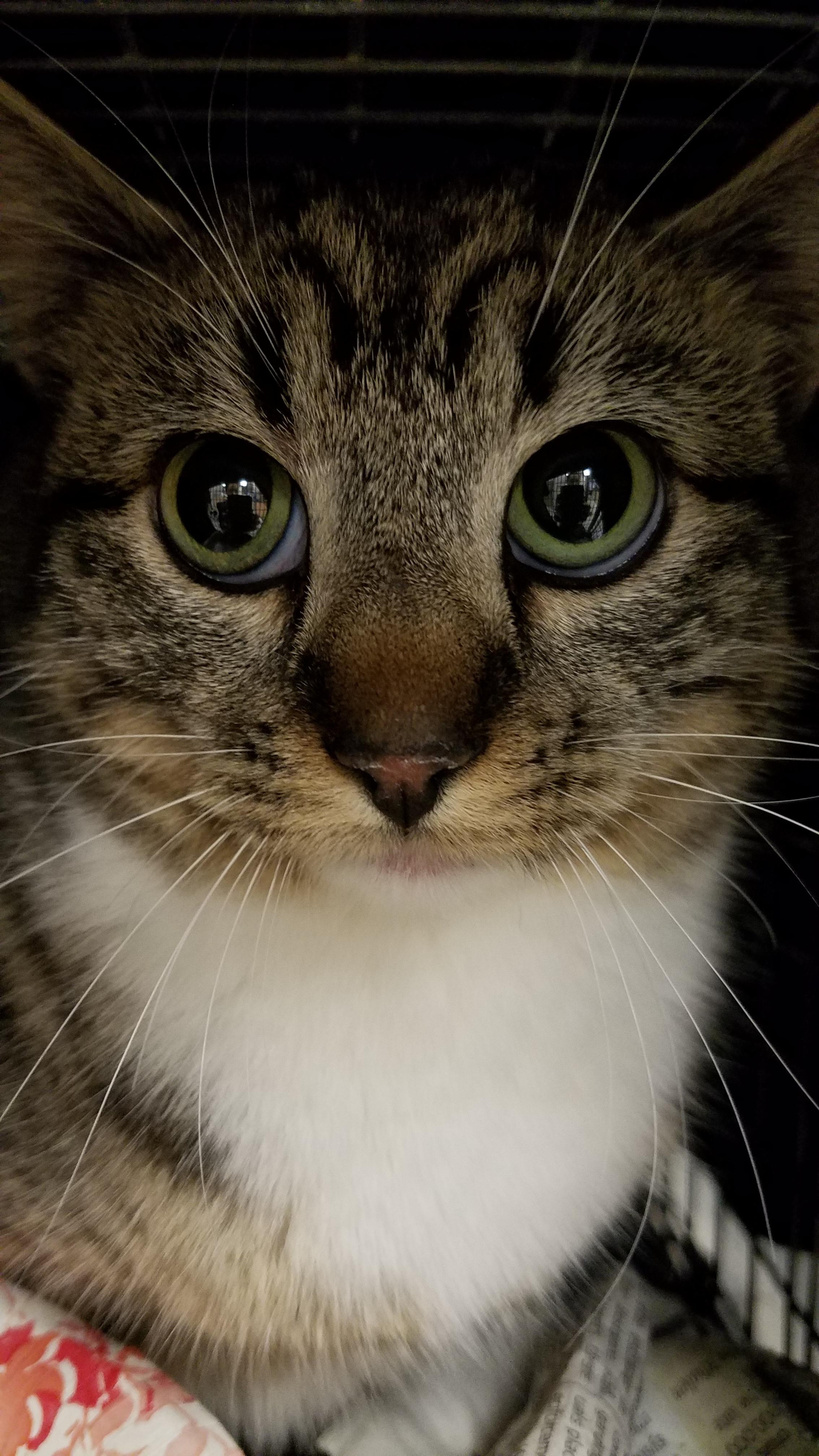 kitten2-mama-lookalike.jpg