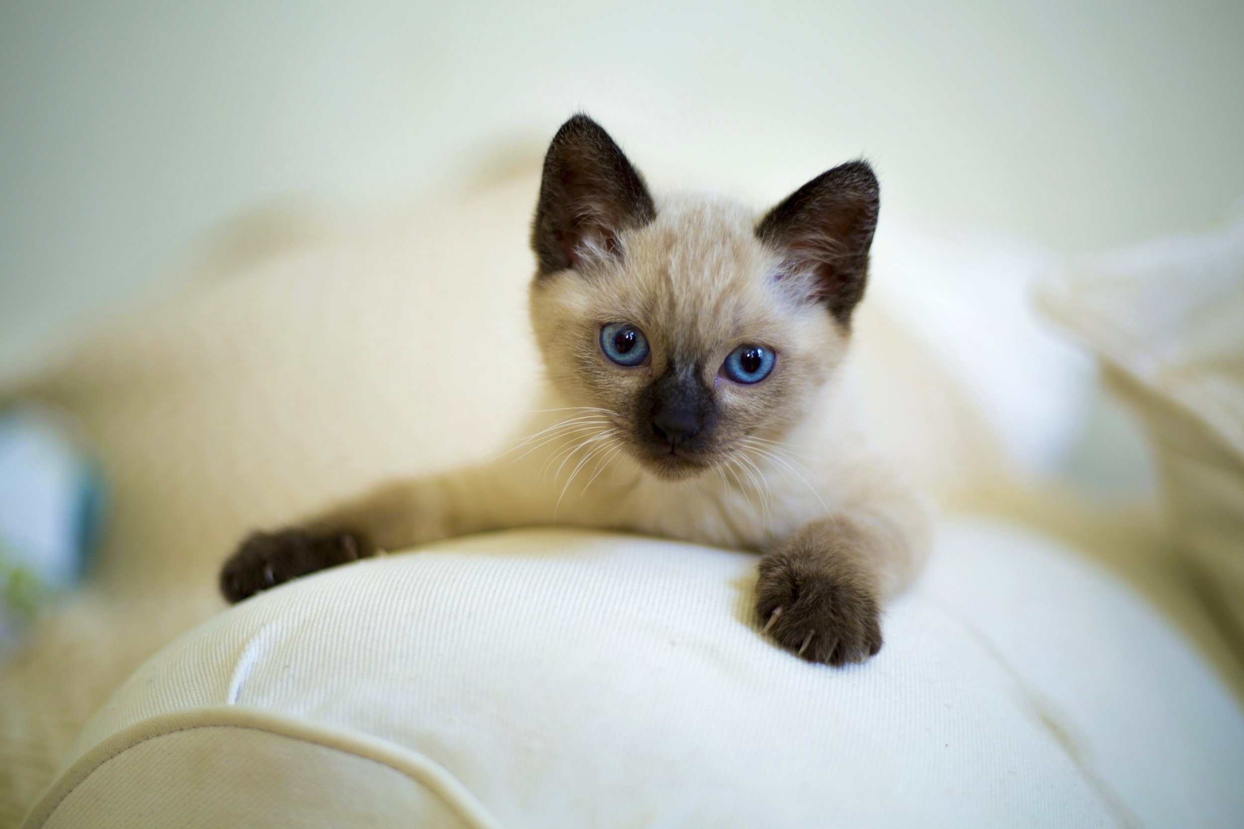 More than 700 kittens have found forever homes through our Kitten Caboose program!