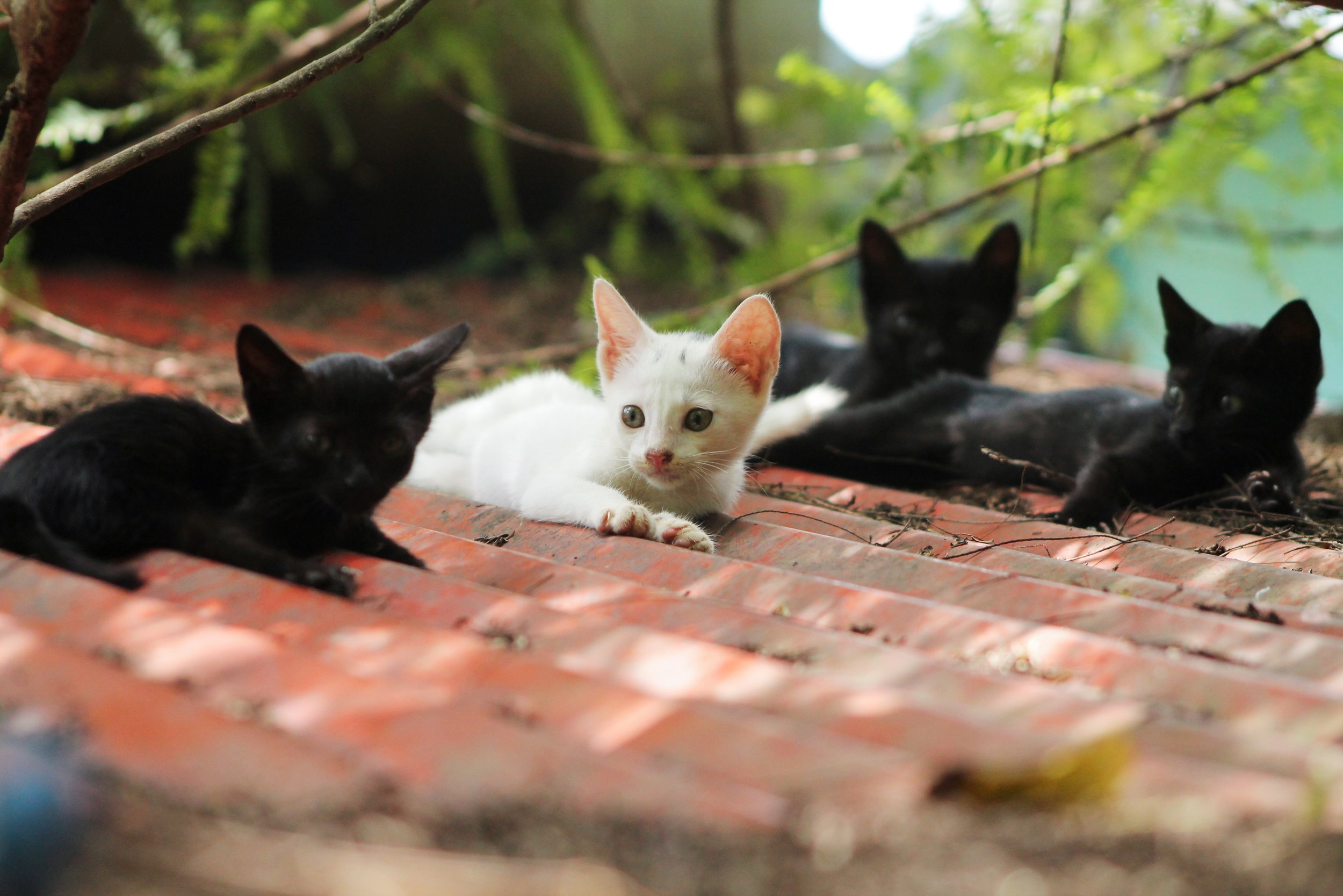 We offer no-cost services for feral, stray, + barn cats (donations accepted). Low-cost services are available for pet cats.