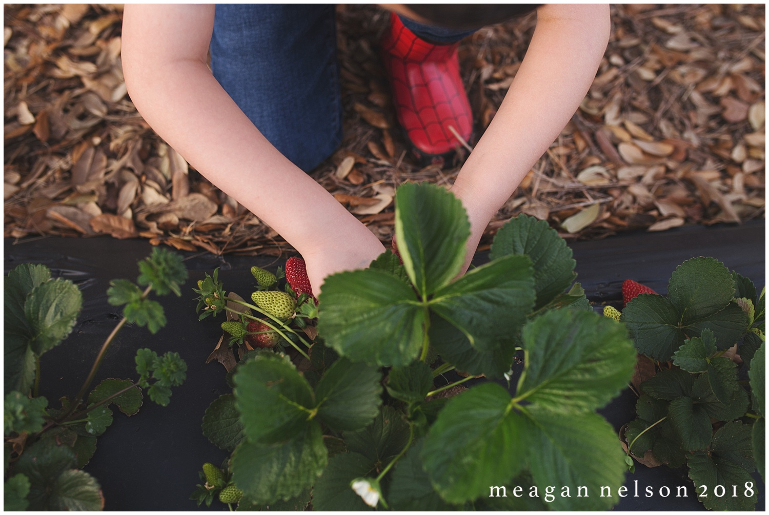 strawberry_patch_session_fort_worth_photographer05.jpg