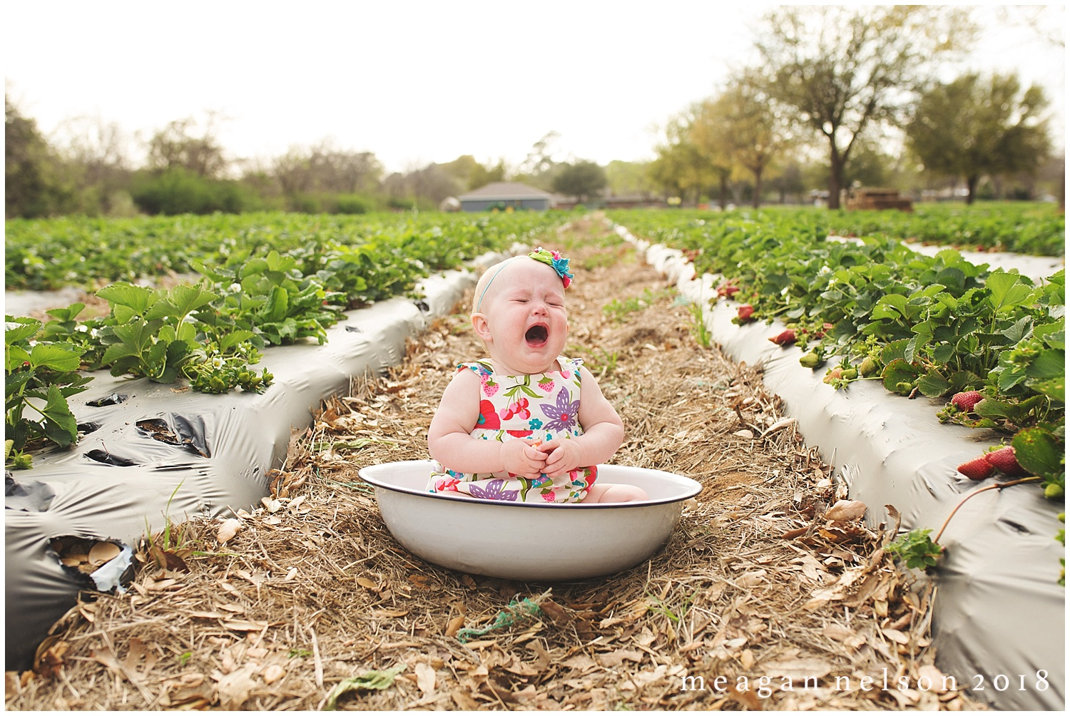strawberry_patch_session_fort_worth_photographer18.jpg