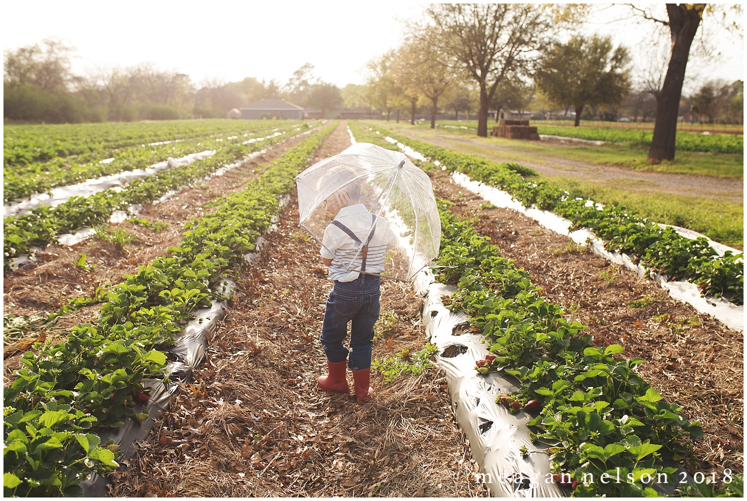 strawberry_patch_session_fort_worth_photographer35.jpg