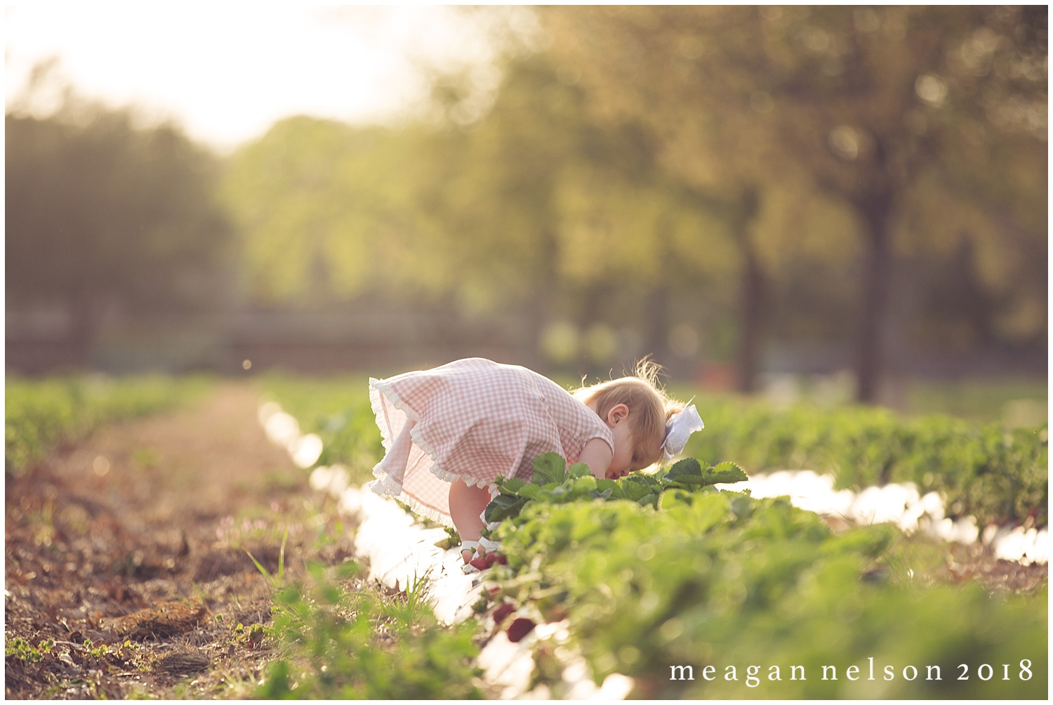 strawberry_patch_session_fort_worth_photographer48.jpg