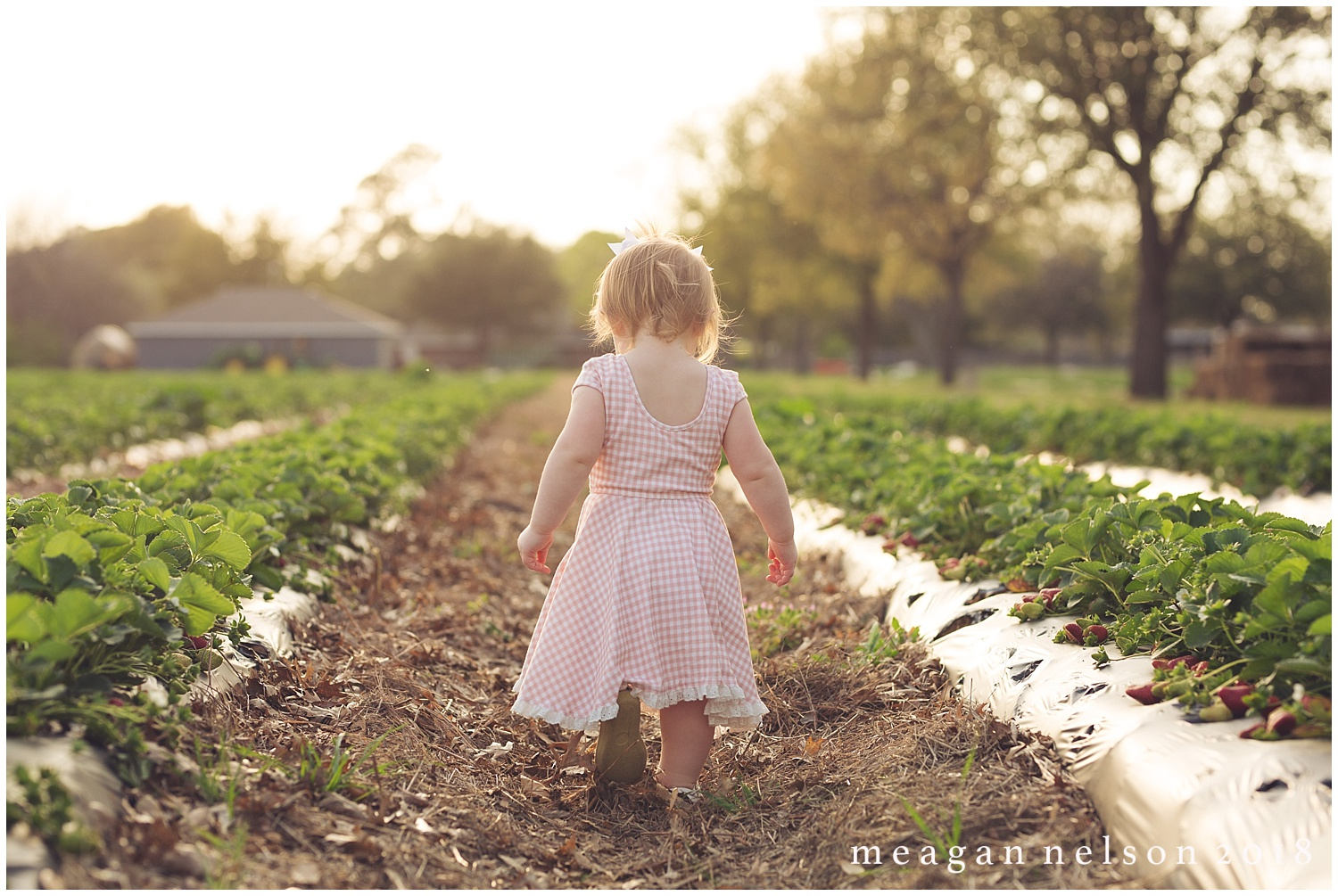 strawberry_patch_session_fort_worth_photographer47.jpg