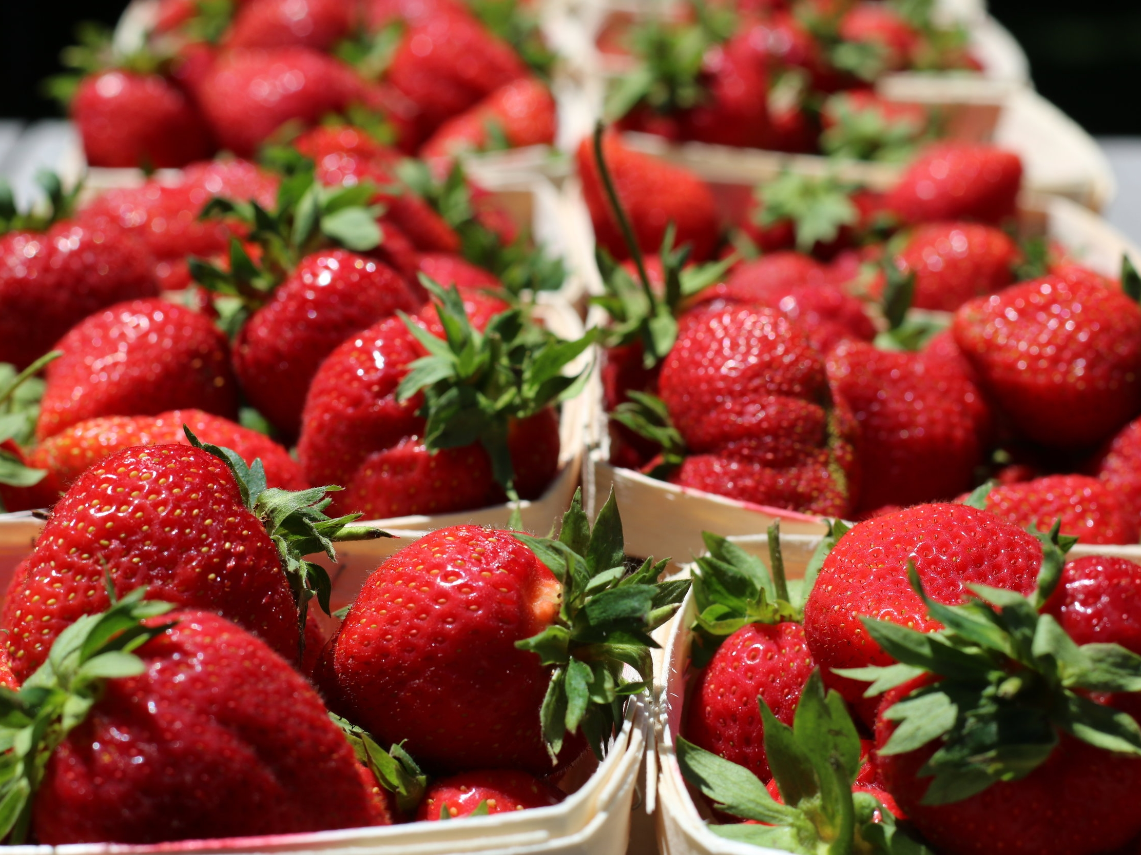 Verrill Farm Strawberries - Celebration of Strawberries