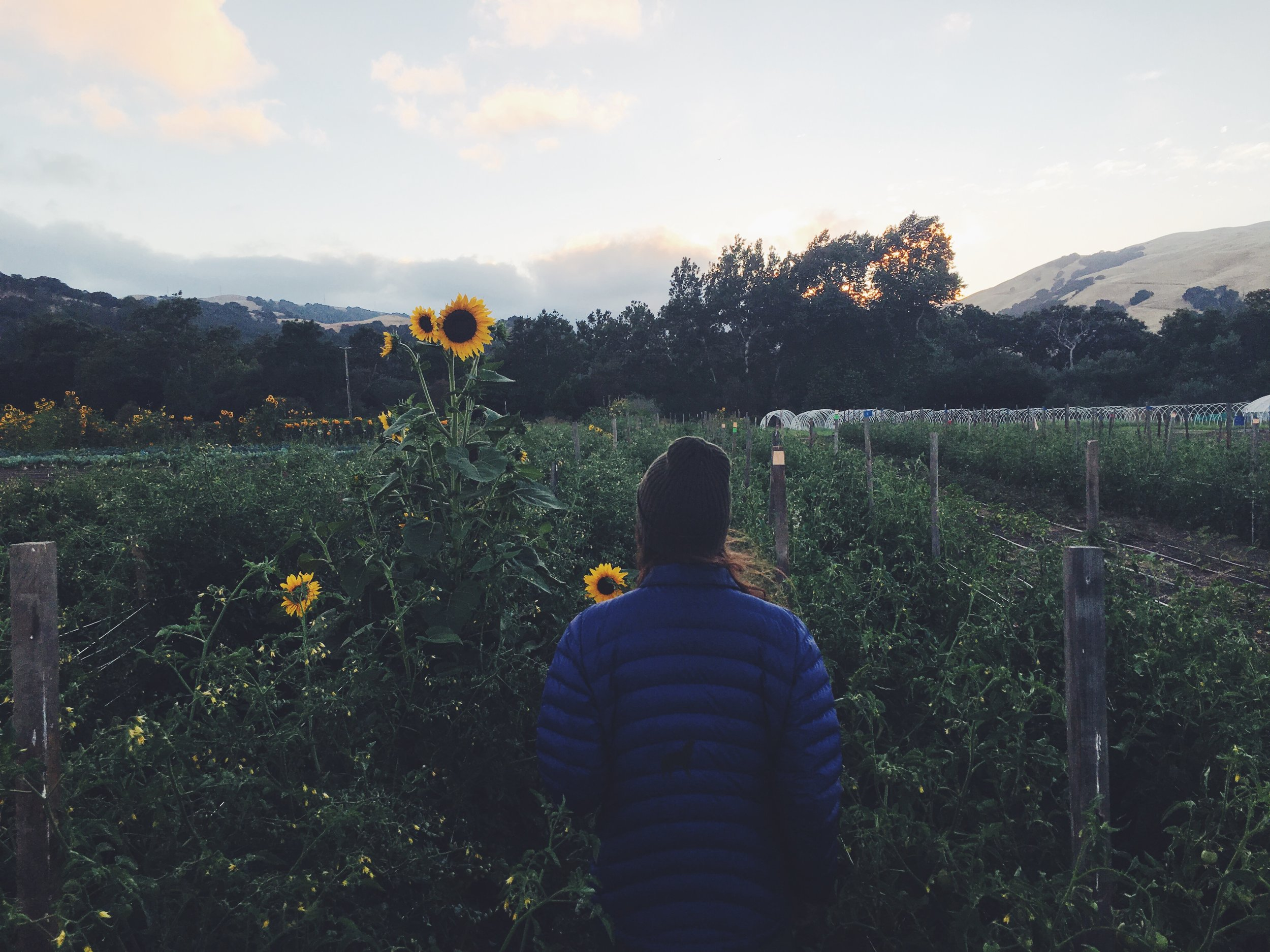 Photo credit: Happy Acre Farm
