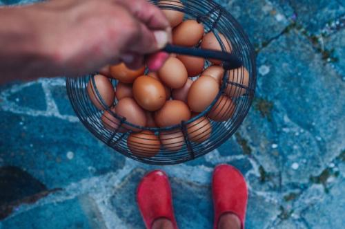 tomotes, garden eggs-33.jpg
