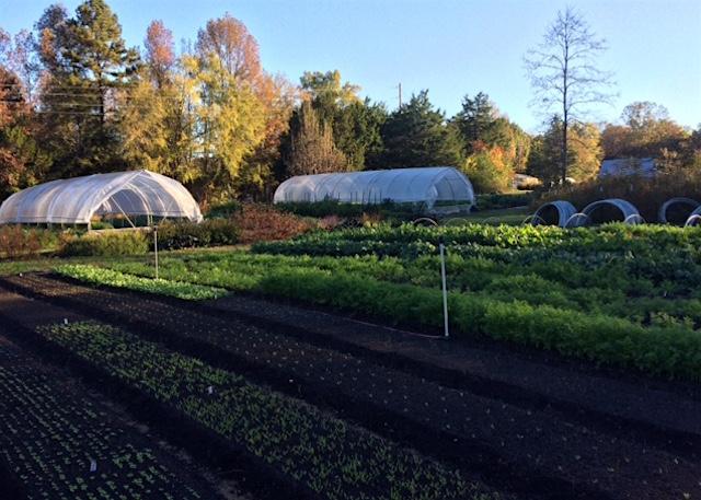 Farm in the fall light.JPG