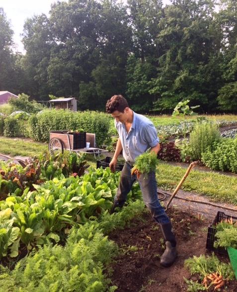 G harvesting carrots in early June.jpg