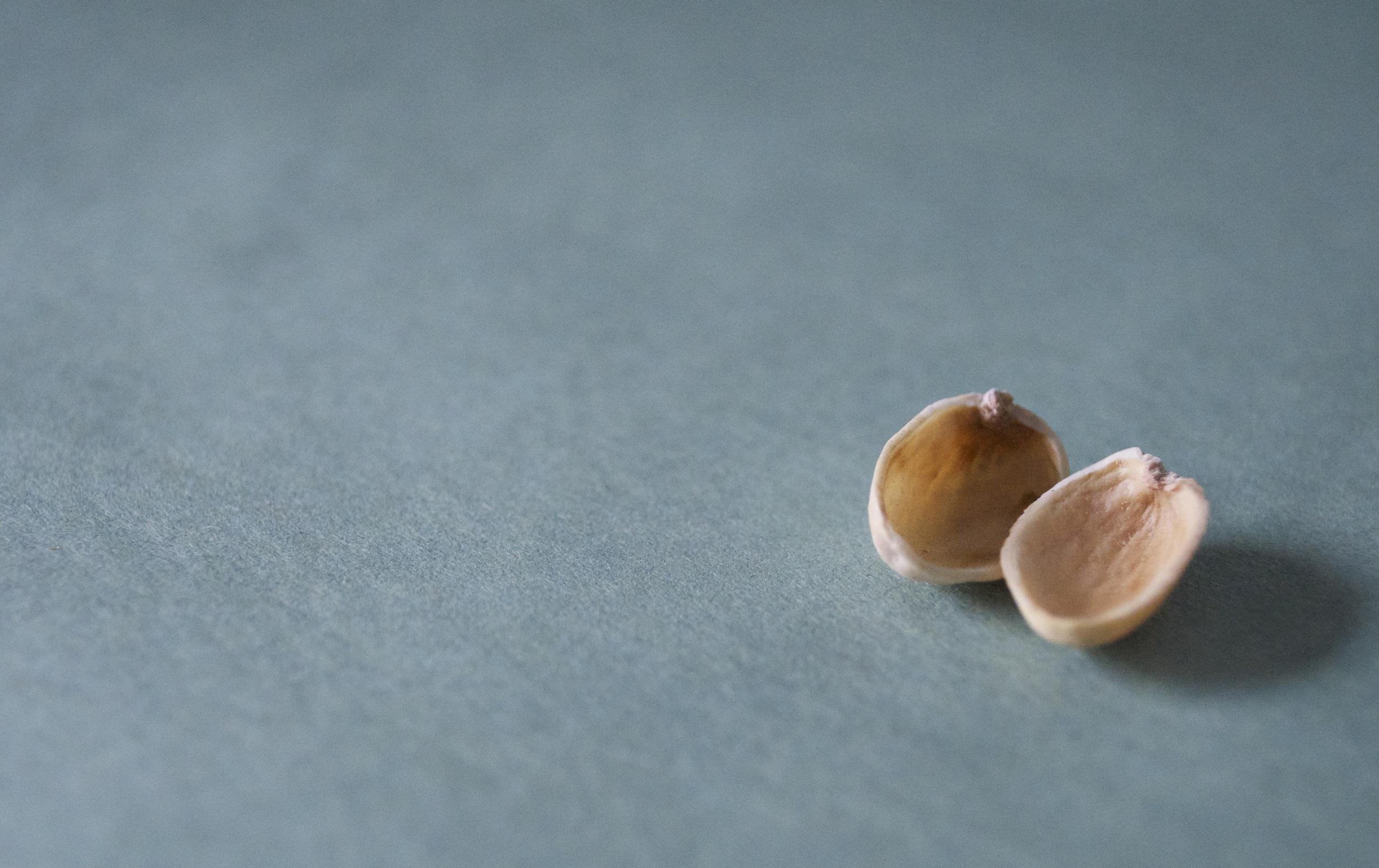 'pistachio'