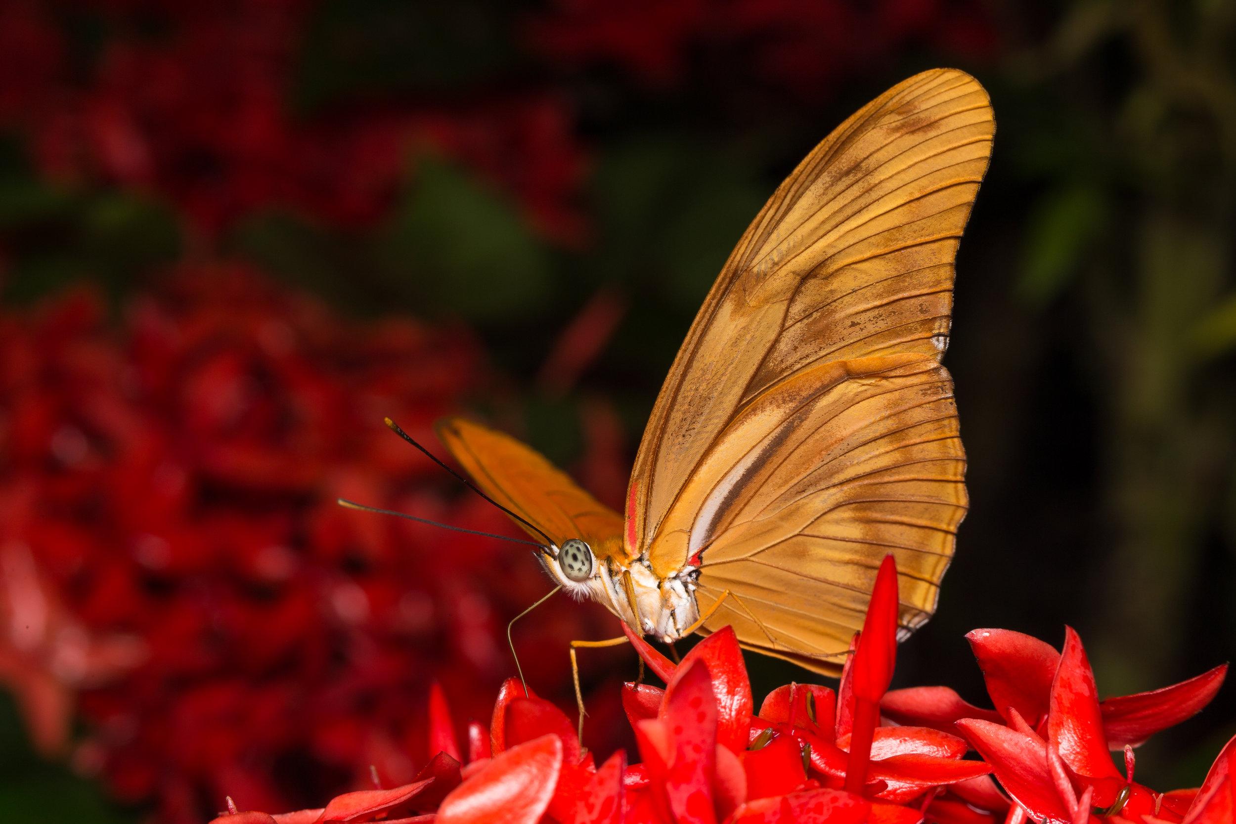 Golden Butterfly Red Flowers.jpg