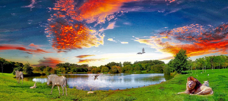animal sunset.jpeg