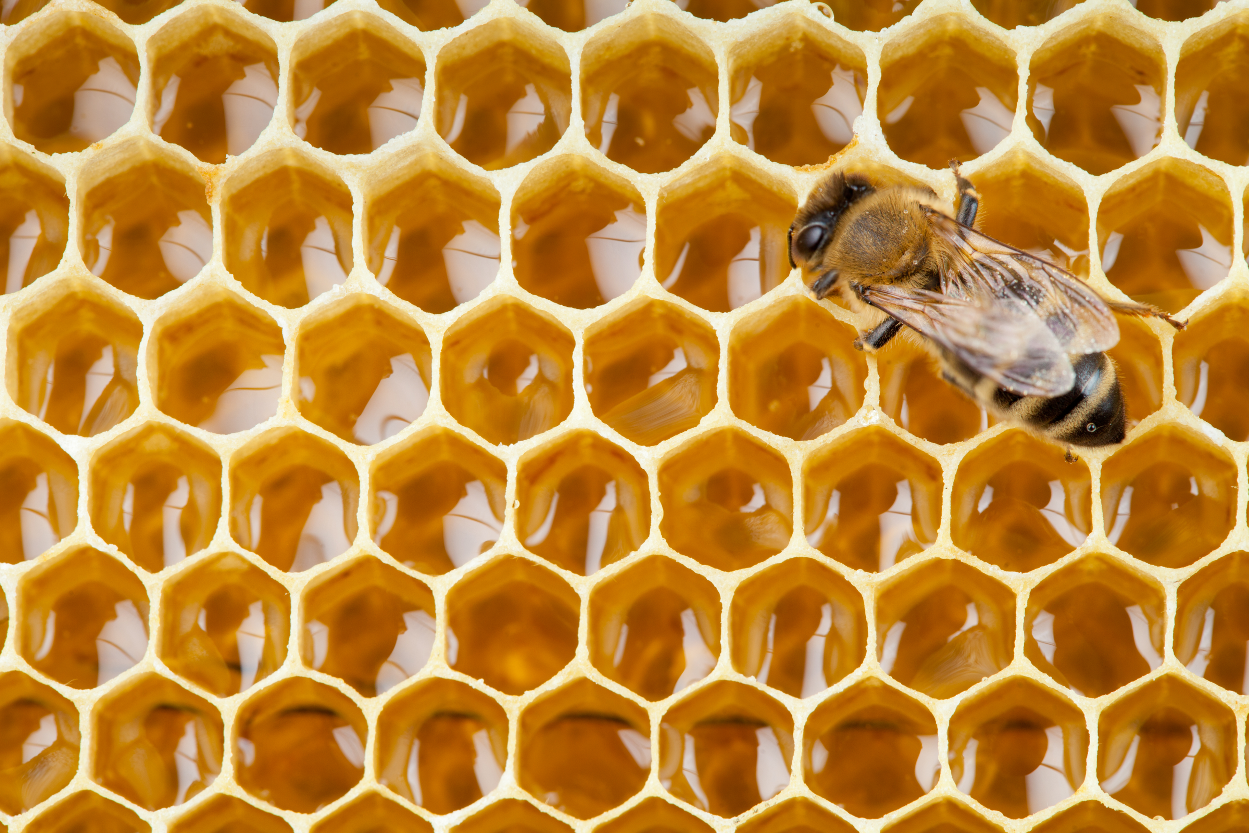 bee honeycomb.png