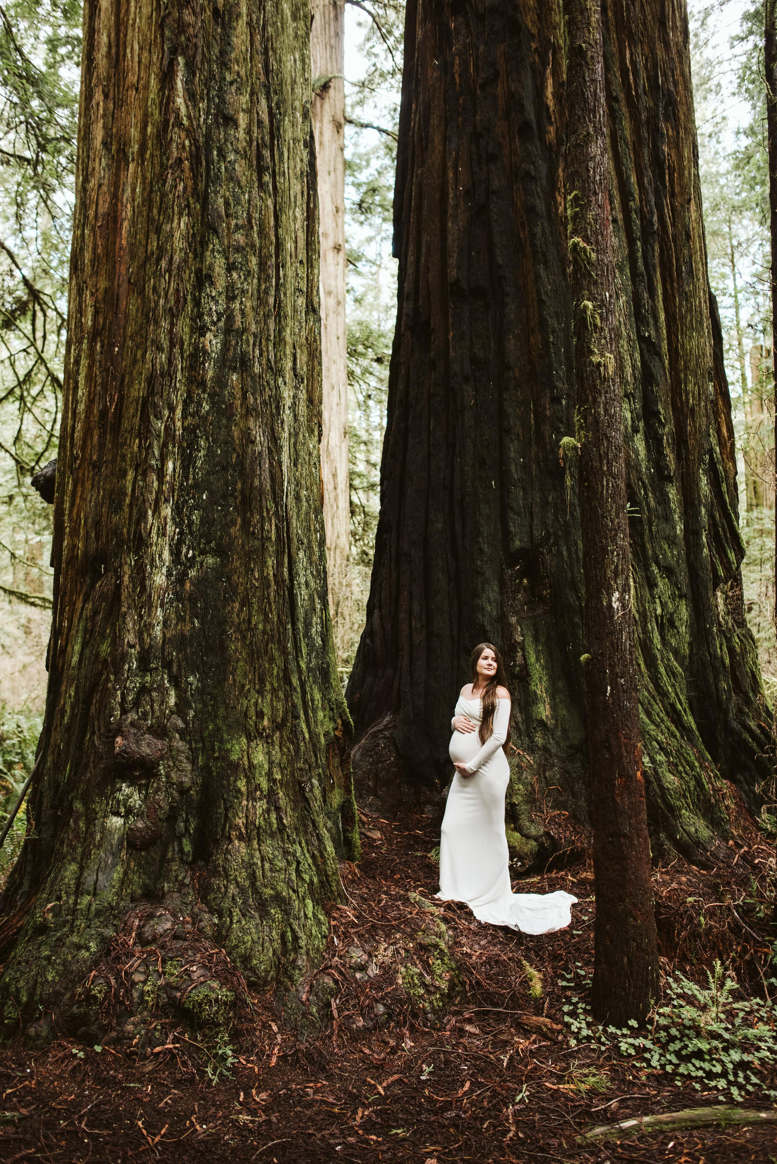 Maya Redwoods Maternity-24.jpg
