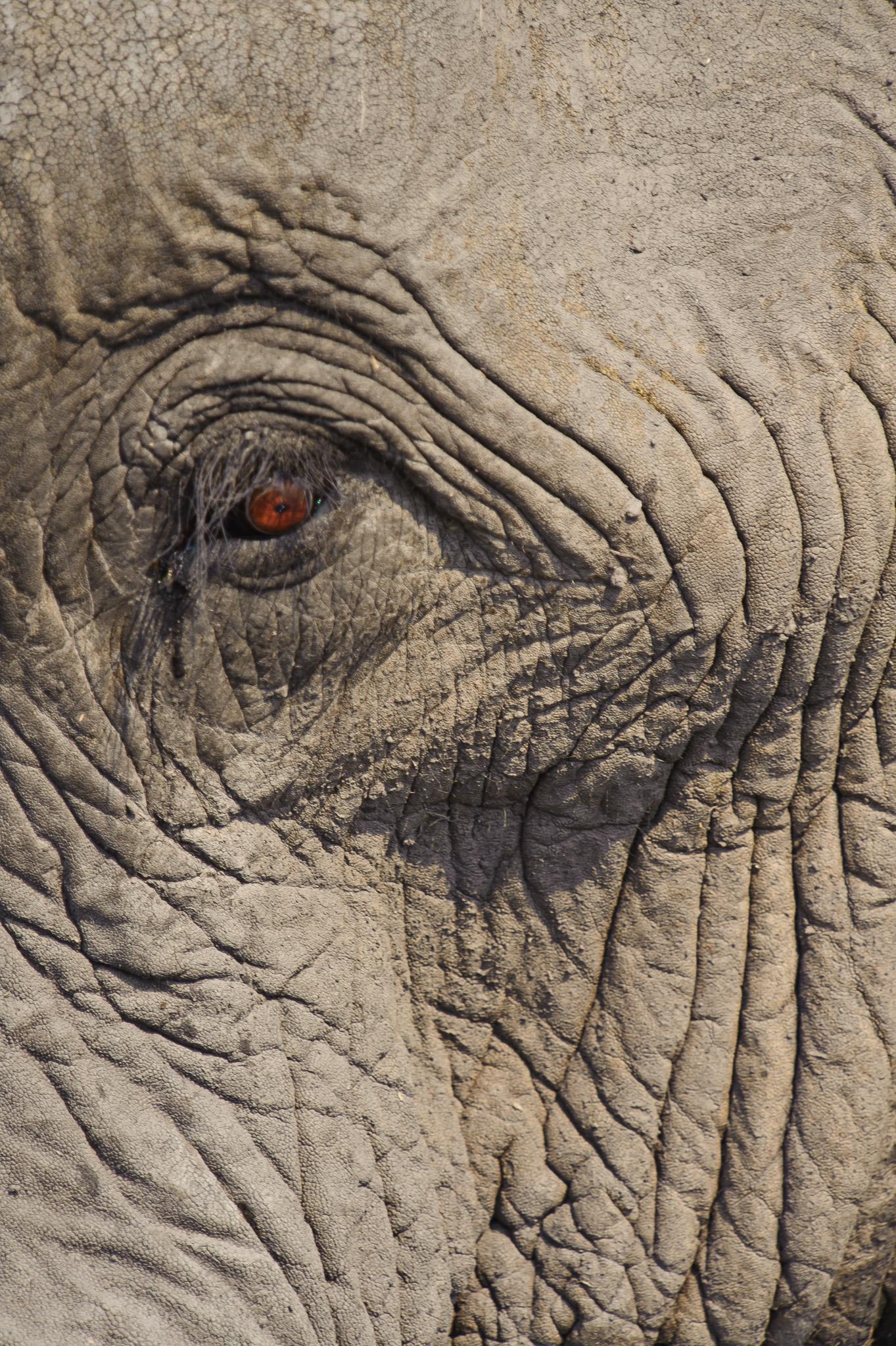 An Eye, Chobe NP, Botswana