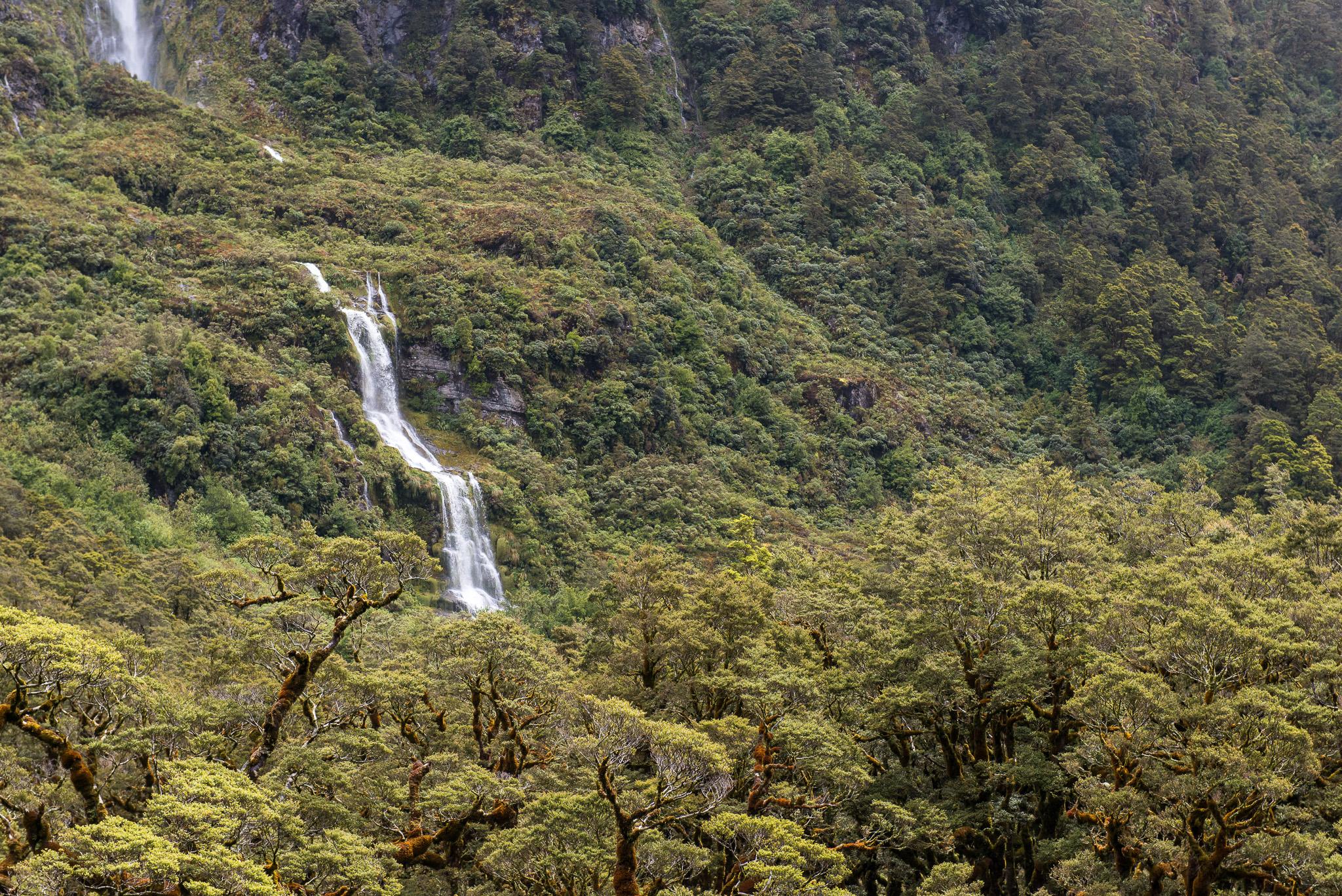 Wilmot Pass, Fiordland NP. New Zealand