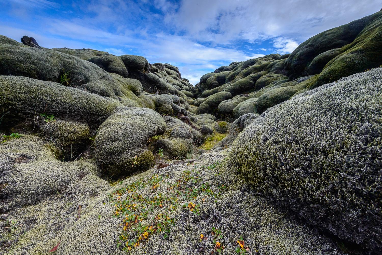 Mossy Lava Rocks, Iceland