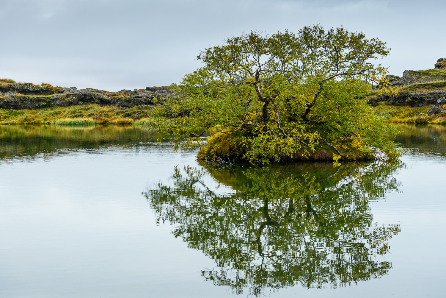 Reflection, Lake Myvatn, Iceland