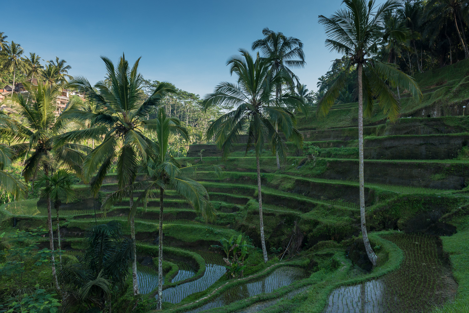 indonesia-june-2014-11.jpg