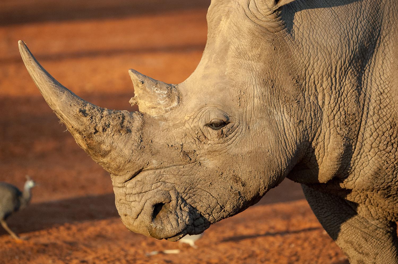 namibia-2006-28.jpg