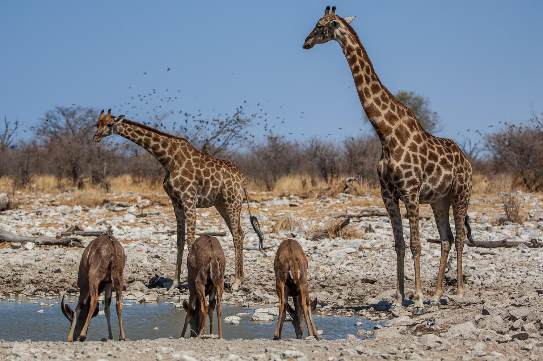 namibia-2006-42.jpg