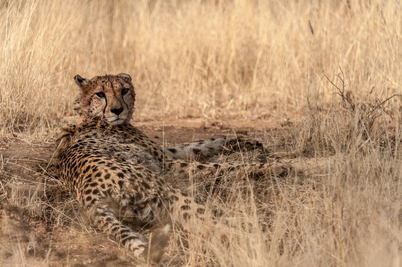 namibia-2010-2.jpg