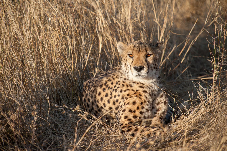 namibia-2010-7.jpg
