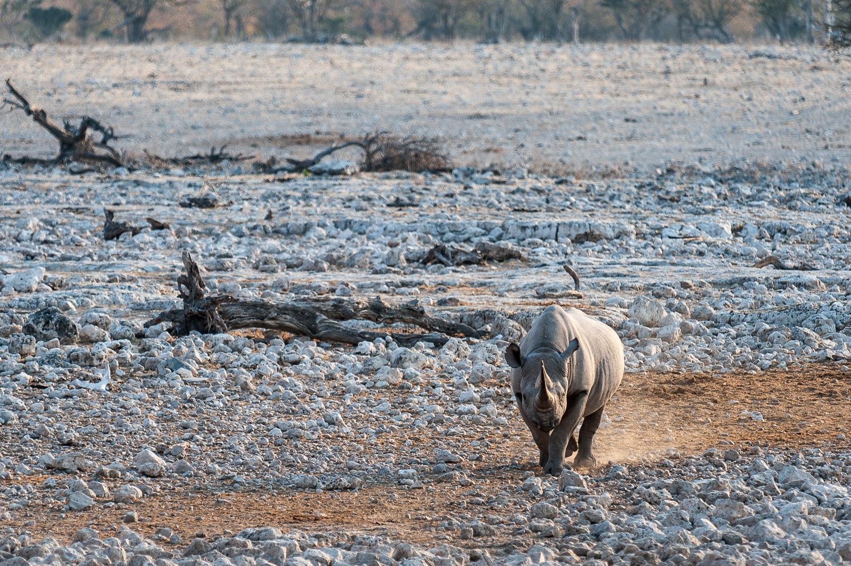 namibia-2010-15.jpg