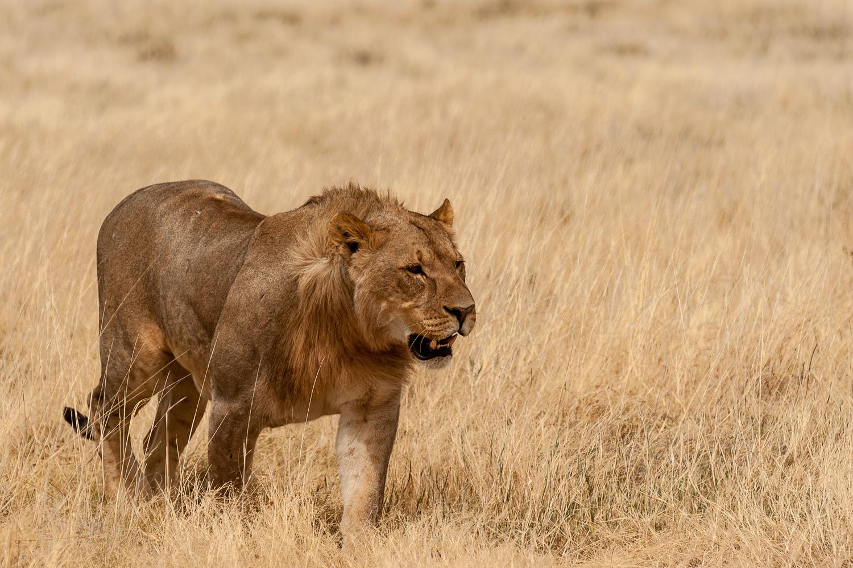 namibia-2010-23.jpg