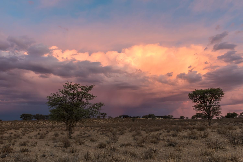 Kgalagadi Transfrontier Park, Botswana