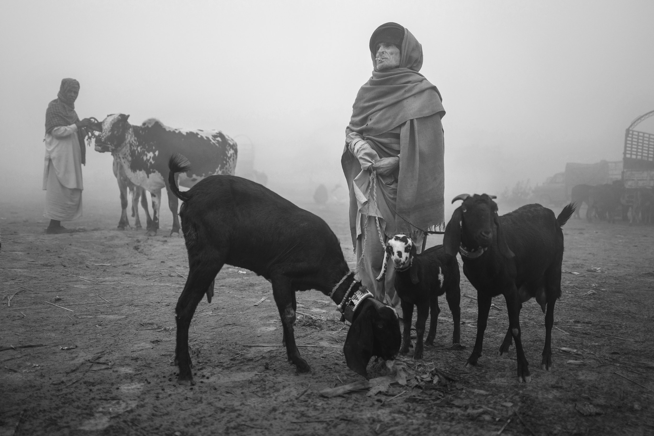 A foggy morning at the cattle market