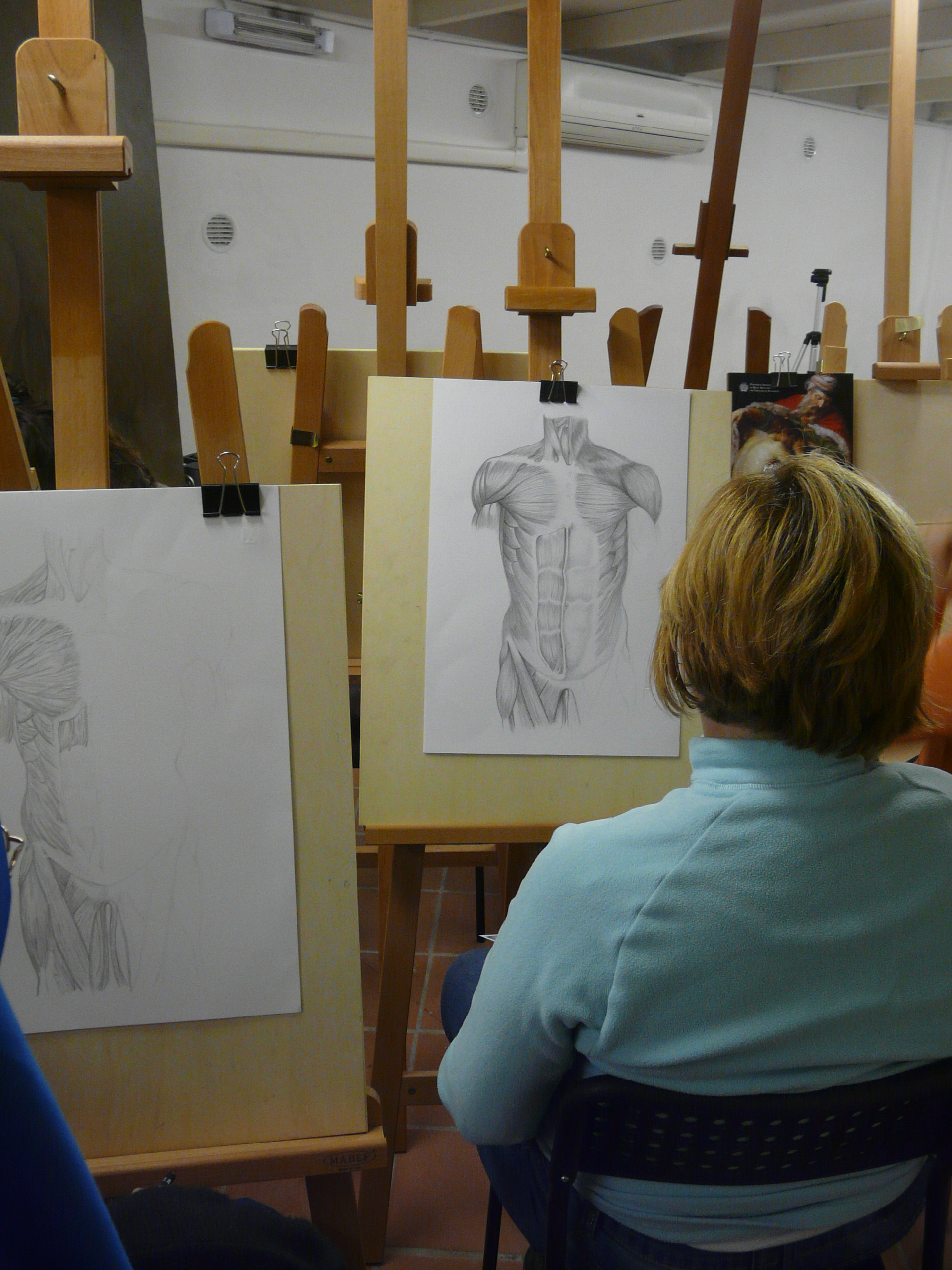 Course of anatomy for artists