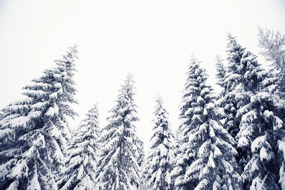 Edindesign-Vinternomade-9.jpg