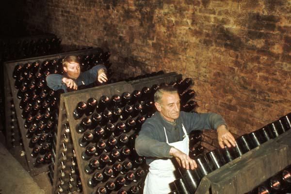 Remuage, manuell vridning av flaskorna för att död jäst skall falla ned i flaskhalsen. foto Comite Champagne
