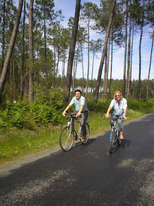 landes. cyklister i pinjeskogen.