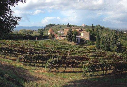 vinodlingar nära certaldo. foto tango7174