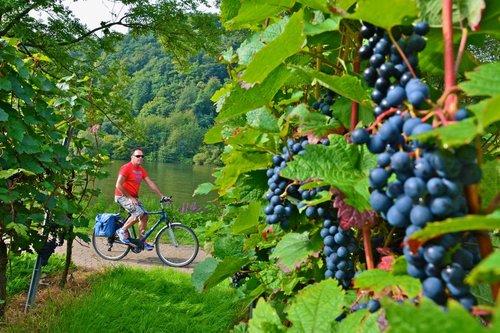 vinodlingar längs cykelvägen