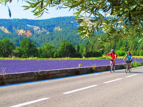 Lavendeln blommar i juli. foto Chemins du Sud