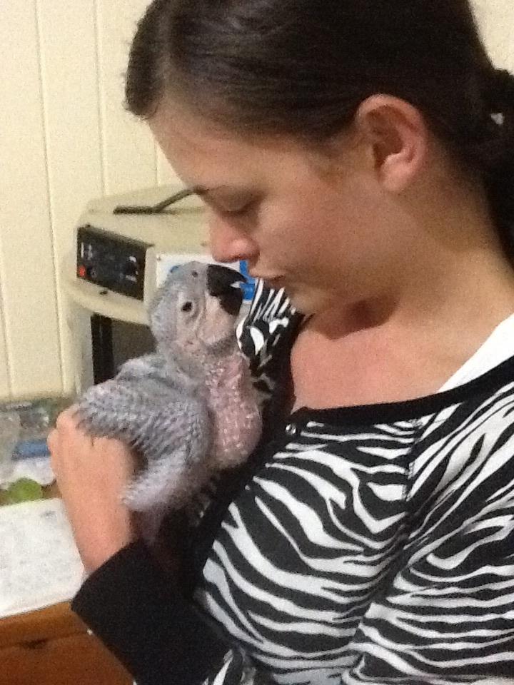 Zazu as a baby bird