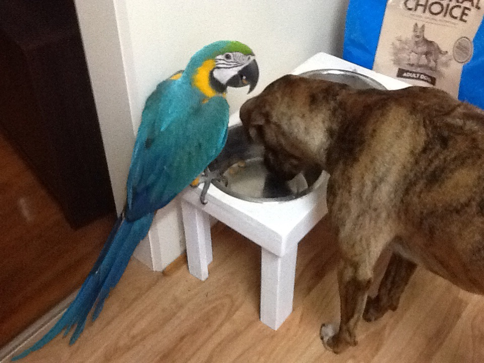 Stealing the dogs food!