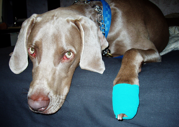 Small injuries and accidents are part of owning a pet. Being prepared and knowing what to do in an accident or emergency could help save your pets life.