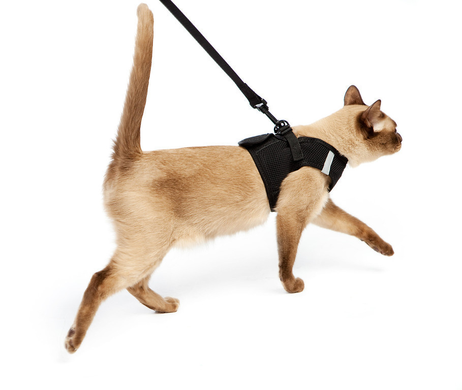 Teaching your cat to be comfortable wearing a harness can be a life saver on board!