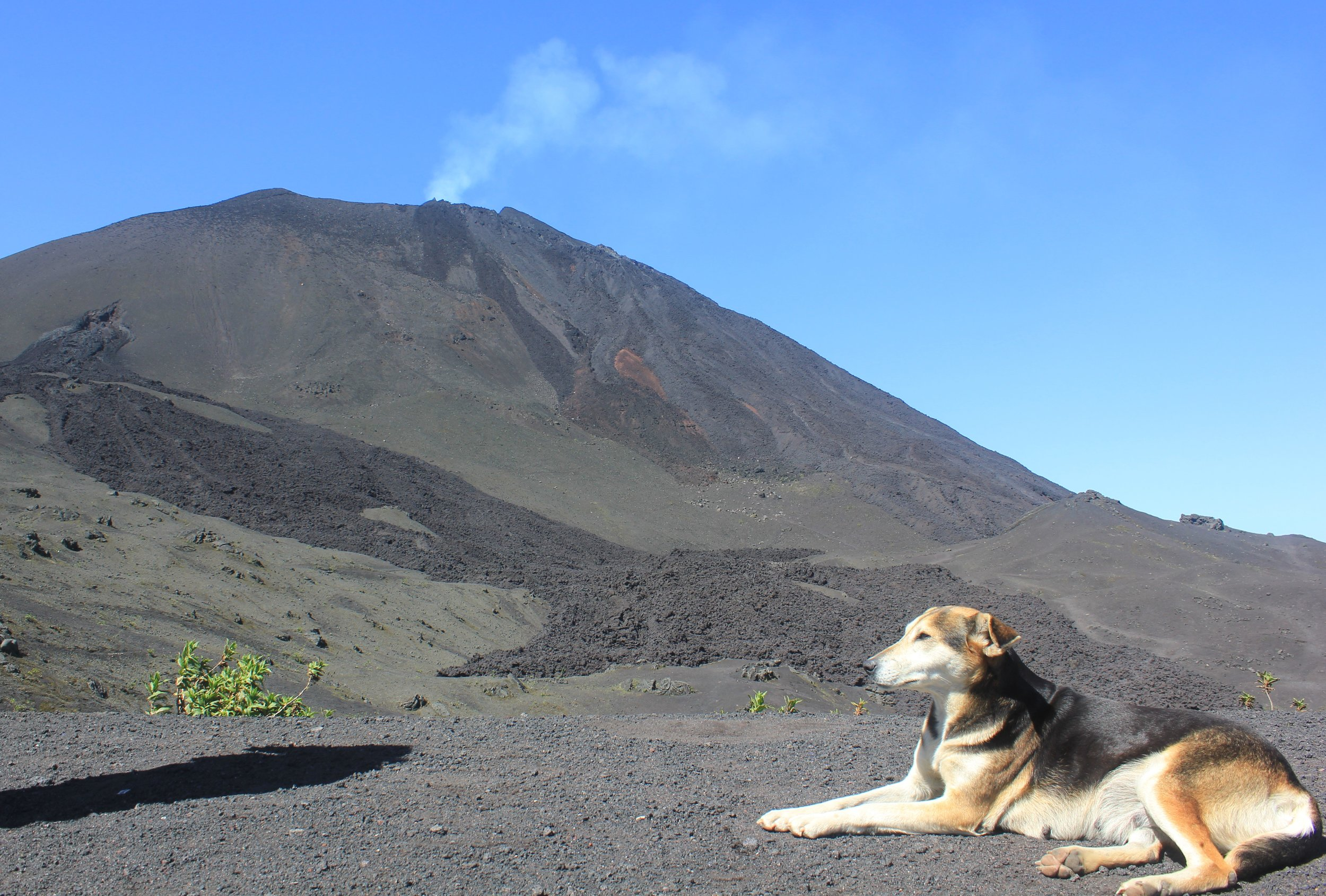 Volcan Pacaya... bubbling away. Local dogs do the 7km hike regularly because they often get a little nibble of the tourists food!