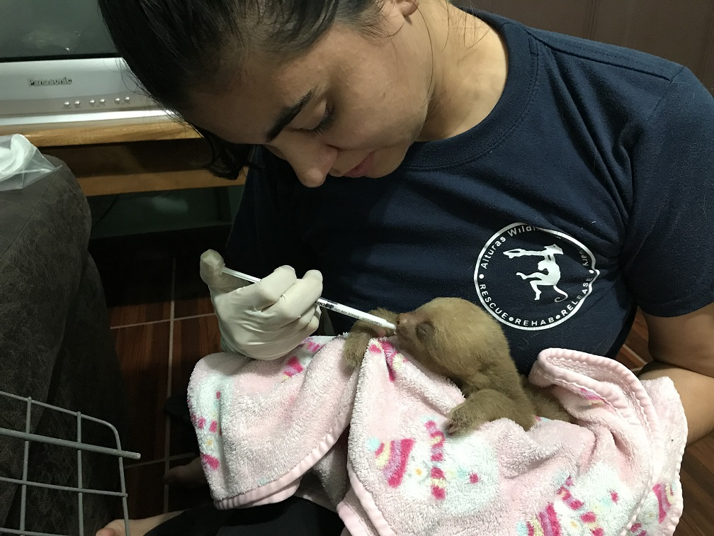 Dr Sandy being amazing as usual caring for a 4 week old two toed sloth!