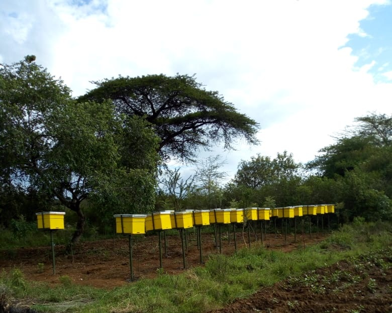 Some of the Baringo beehives.