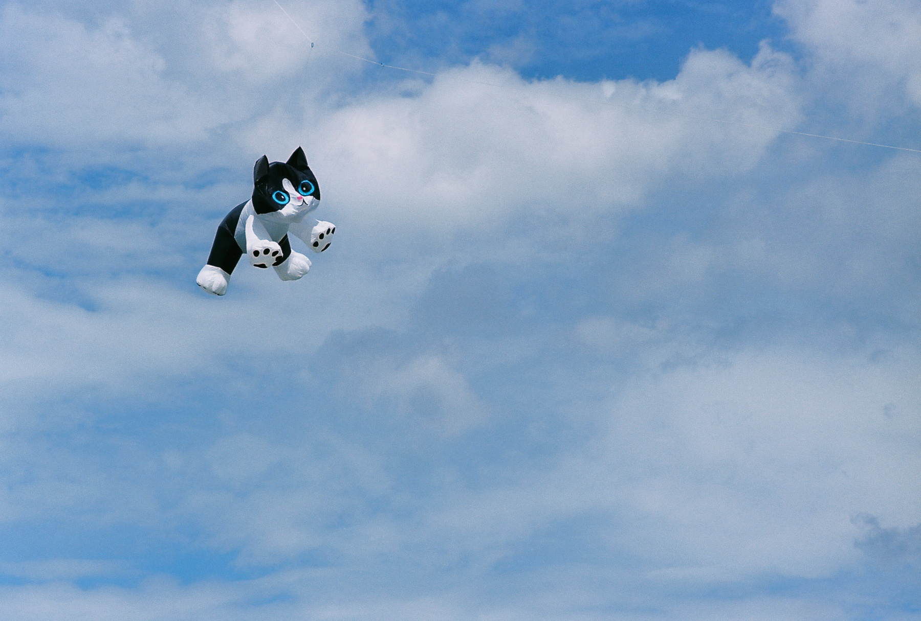 Kitty In The Clouds