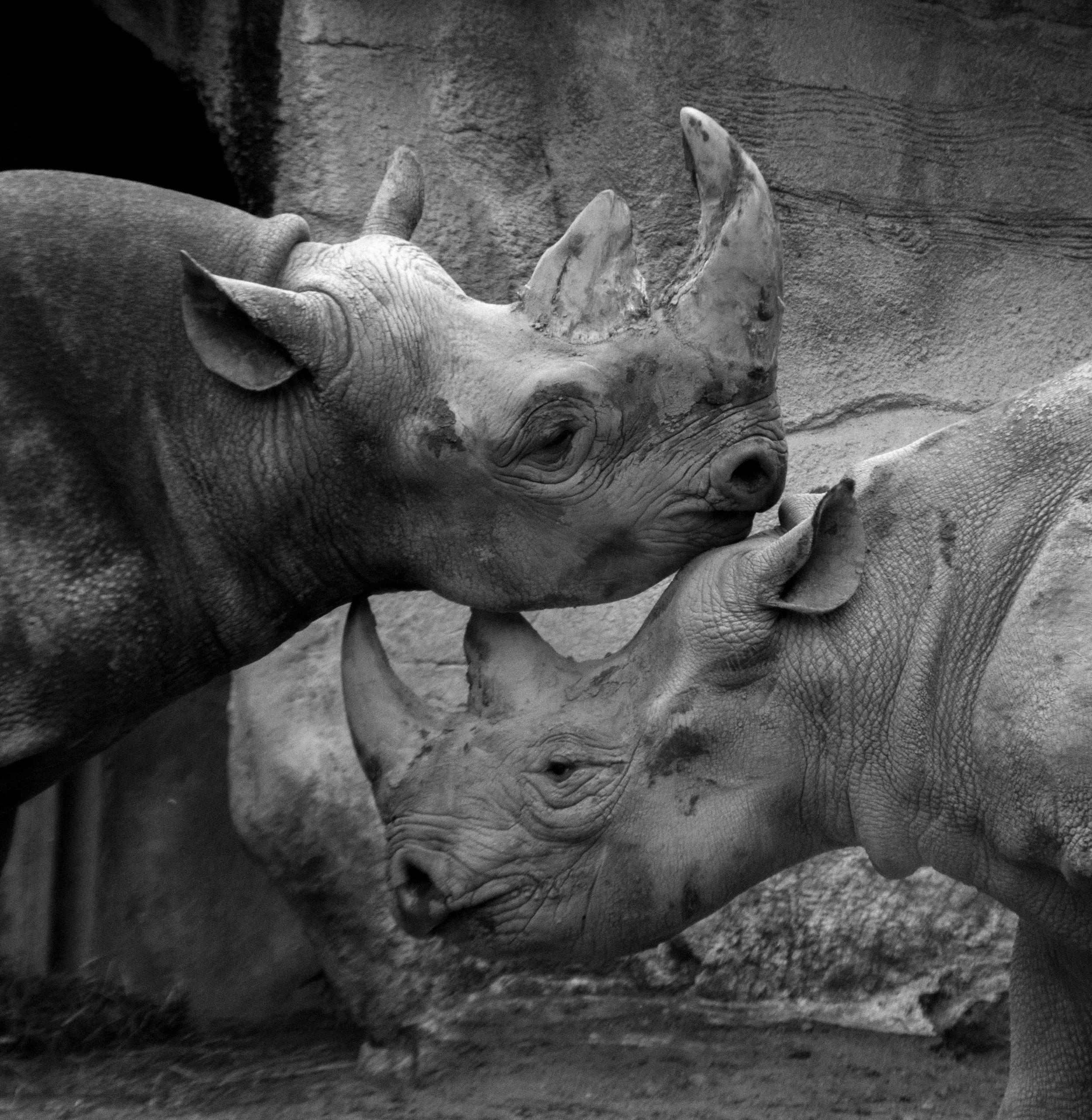 East / West Rhinos